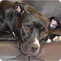 Adopt A Pet :: Hope - Nashville, TN