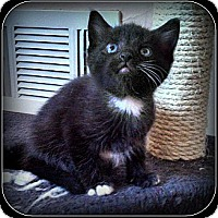 Adopt A Pet :: Hershey - ADOPTION PENDING - South Plainfield, NJ