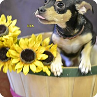 Adopt A Pet :: REX - Higley, AZ