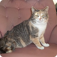 Adopt A Pet :: Macy - Acme, PA