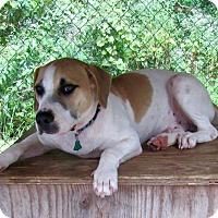Adopt A Pet :: Otis - Edisto Island, SC