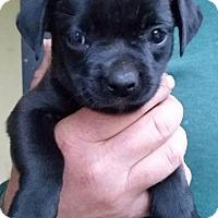 Adopt A Pet :: Bailey - Gainesville, FL