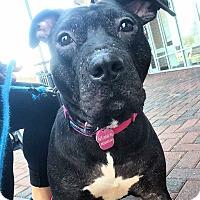 Adopt A Pet :: Princess - Pompton Lakes, NJ