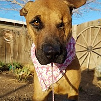 Adopt A Pet :: Pyrate aka Christina - Apple Valley, CA