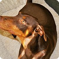 Adopt A Pet :: Captain - Redondo Beach, CA