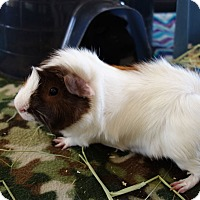 Adopt A Pet :: Tazzy & Dresden - Fullerton, CA