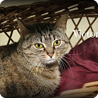 Adopt A Pet :: Little Queen Victoria - Glen Mills, PA