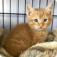 Adopt A Pet :: Clifford - Island Park, NY
