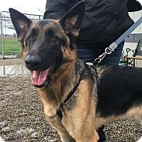 Adopt A Pet :: Axel - Visalia, CA