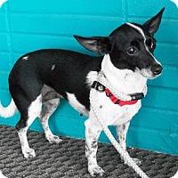 Adopt A Pet :: Mia - Castro Valley, CA