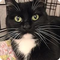 Adopt A Pet :: Majik - Vancouver, BC