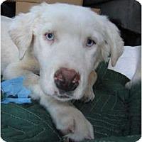 Adopt A Pet :: Camellia - Mesa, AZ