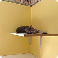Adopt A Pet :: Ray - Lancaster, MA