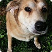 Adopt A Pet :: Tish - Oberlin, OH
