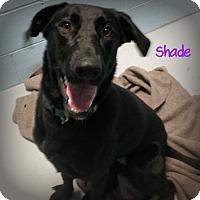 Adopt A Pet :: Shade - Muskegon, MI