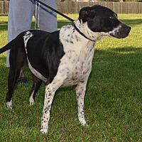 Adopt A Pet :: FRECKLES - Beaumont, TX