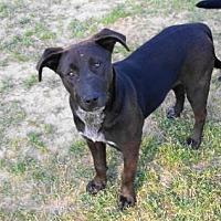 Adopt A Pet :: A-Ebony - Tyler, TX