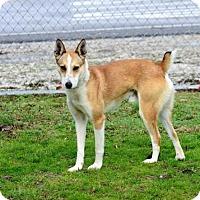 Adopt A Pet :: Buck - Kendall, NY