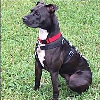 Adopt A Pet :: Nala - Miramar, FL