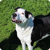 Adopt A Pet :: Myah - Yuba City, CA