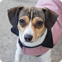Adopt A Pet :: Missy Elliott - Grand Rapids, MI