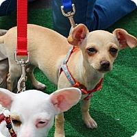 Adopt A Pet :: Cody - Yuba City, CA