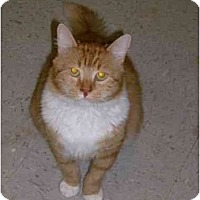 Adopt A Pet :: Billy Joe - Jenkintown, PA