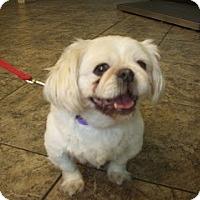 Adopt A Pet :: Jeffery - Virginia Beach, VA