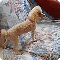 Adopt A Pet :: Romeo - Charlotte, NC