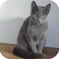 Adopt A Pet :: Alexandra - Dallas, TX