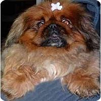 Adopt A Pet :: Rose - Mays Landing, NJ