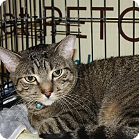 Adopt A Pet :: Sammy (MP) - Little Falls, NJ