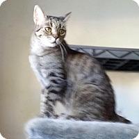 Adopt A Pet :: Magnolia - Phoenix, AZ