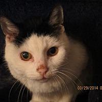 Adopt A Pet :: Wilma - Vacaville, CA