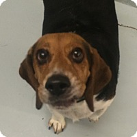 Adopt A Pet :: Charles - Oak Ridge, NJ