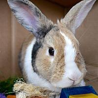 Adopt A Pet :: Dexter - Montclair, CA