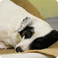 Adopt A Pet :: Jane - Elyria, OH