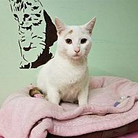 Adopt A Pet :: Hart - Murphysboro, IL
