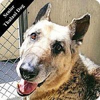 Adopt A Pet :: Robert T. - Cupertino, CA