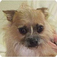 Adopt A Pet :: Newt - Allentown, PA