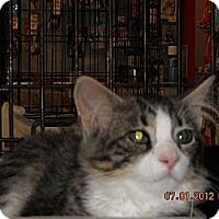 Adopt A Pet :: Jacob - Riverside, RI