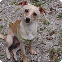 Adopt A Pet :: Spike - Brewster, NY