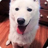 Adopt A Pet :: Maverick - Douglas, ON