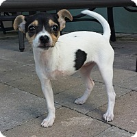 Adopt A Pet :: Mia - Fort Lauderdale, FL