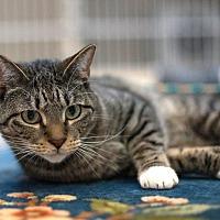Adopt A Pet :: Mel - Salisbury, NC