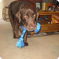 Adopt A Pet :: Jake - Ocean Ridge, FL