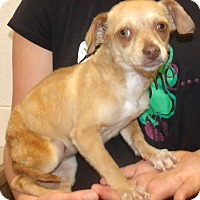 Adopt A Pet :: CANDY - Corona, CA