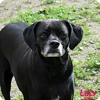 Adopt A Pet :: Lacy - Santa Maria, CA