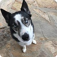 Adopt A Pet :: Hunter - Waxhaw, NC
