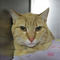 Adopt A Pet :: Oliver - Lunenburg, MA